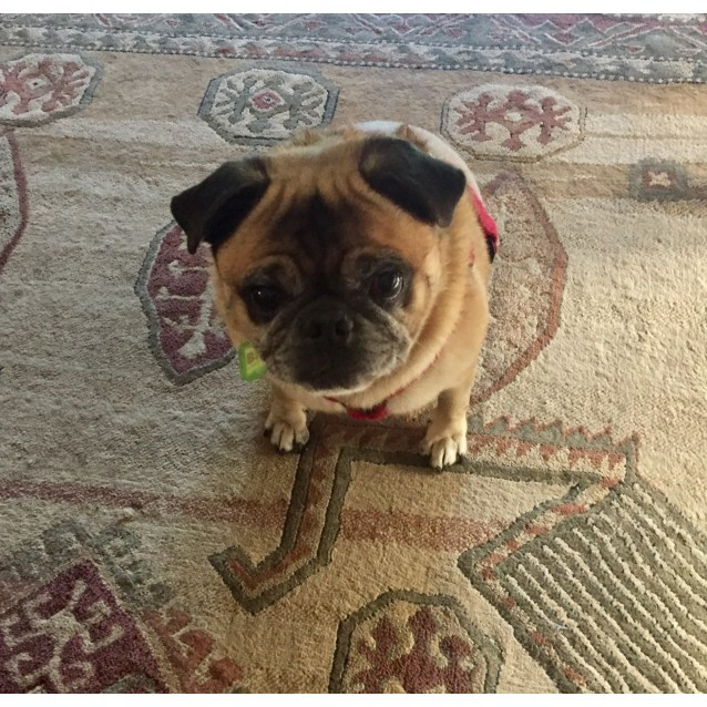 Photo of Puggy