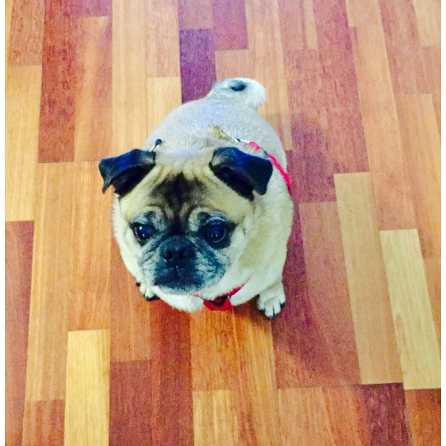 Photo of Puggy
