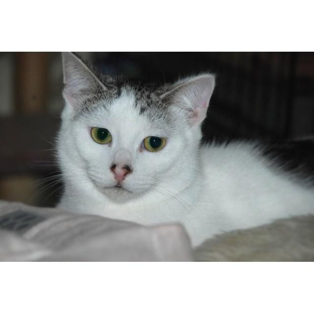 Photo of Zimba