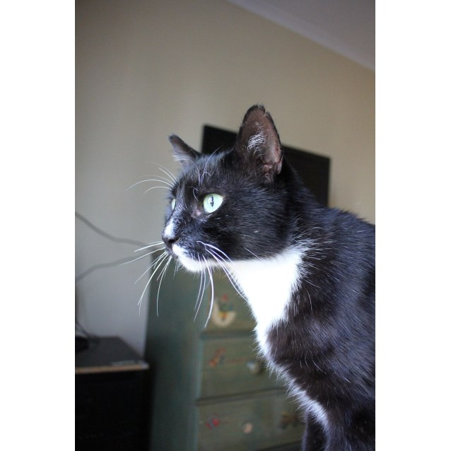 Photo of Issac (Located In West Footscray)