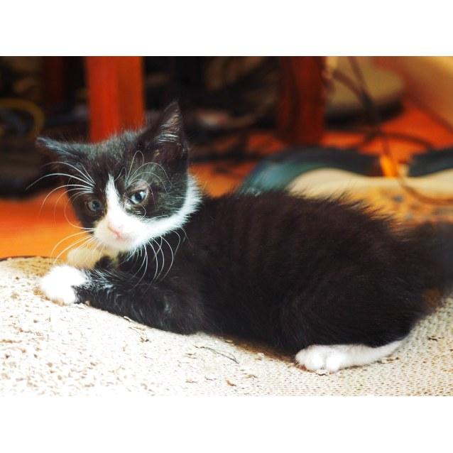 Photo of Hobnob (Adopted)