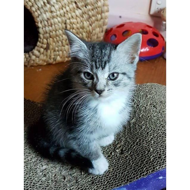 Photo of Persimmon