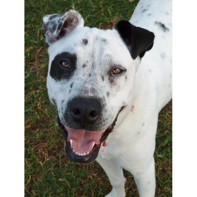 Photo of Buddy  *Sydney Animal Rescue*