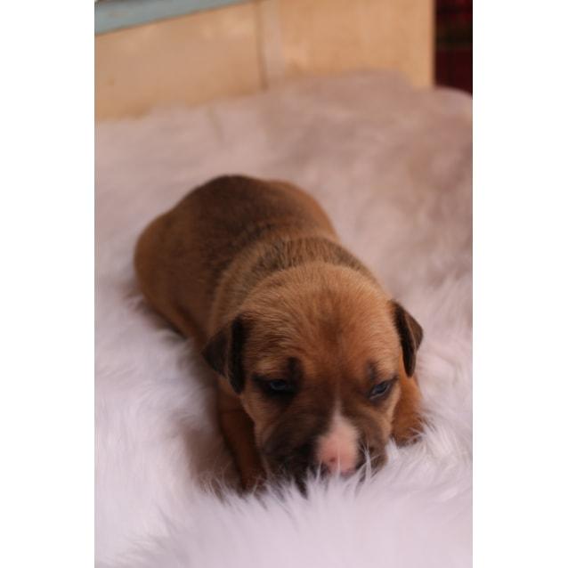 Photo of Ezra (Adoption Pending)