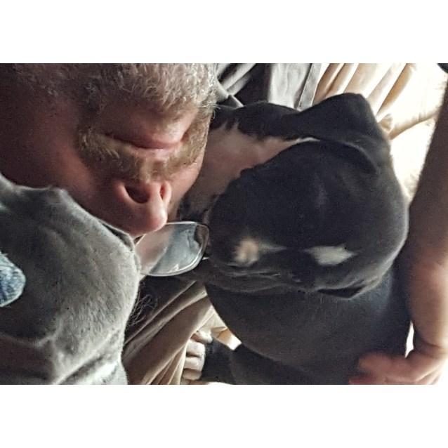 Photo of Xena (Adoption Pending)