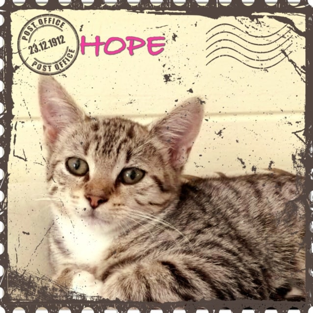 Photo of Hope  Adopted