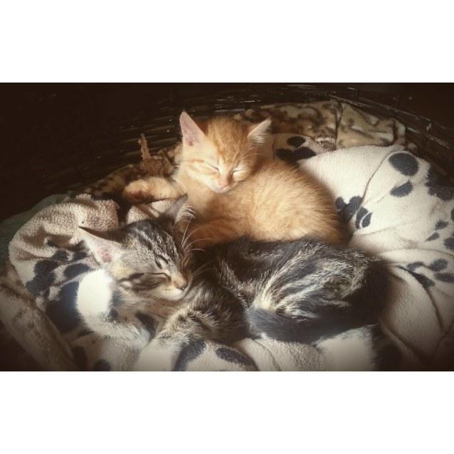 Photo of Paka   Swahili For Cat