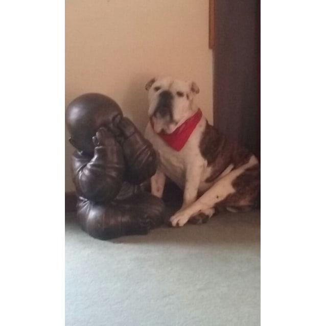 Photo of Charlie Brown The Bulldog