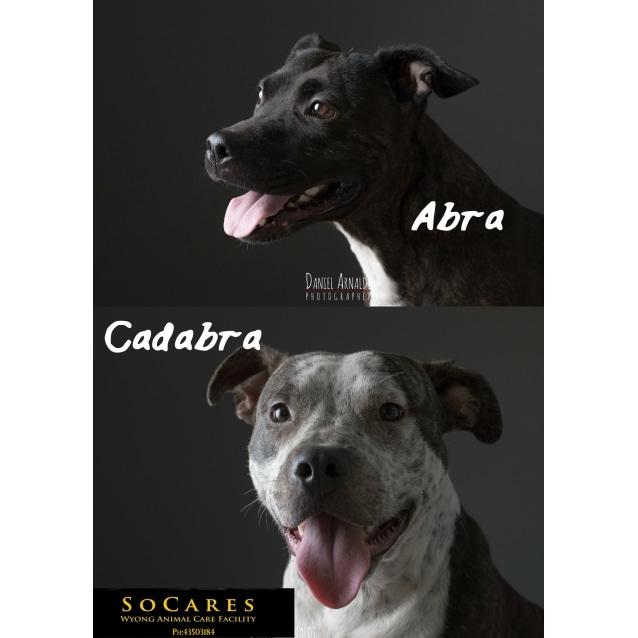 Photo of Abra & Cadabra   Gorgeous Bonded Pair