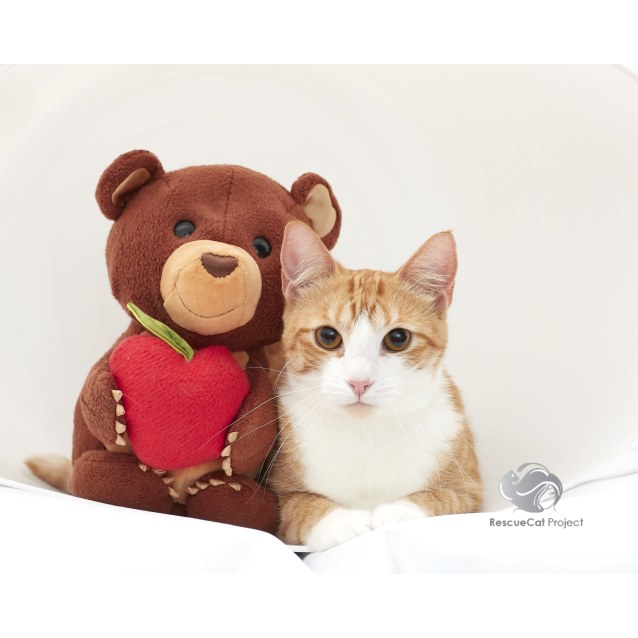 Photo of Jasmine *Sydney Animal Rescue Inc.*
