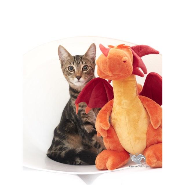 Photo of Sampras *Sydney Animal Rescue Inc.*