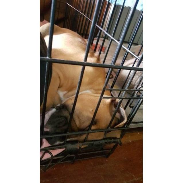 Photo of Angel (Adoption Pending)