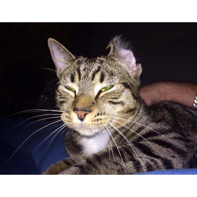 Photo of Magnus (Located In Bentleigh East)