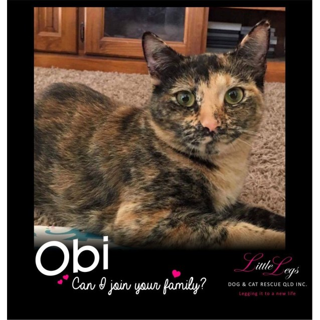 Photo of Obi