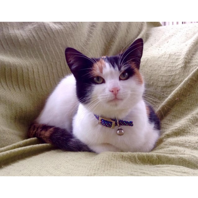 Photo of Polly (Located In Camberwell)