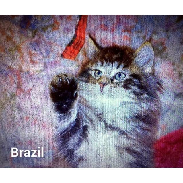 Photo of Brazil The Fluffpot!