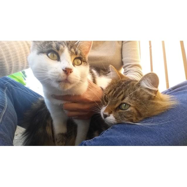 Photo of Ben & Tiger