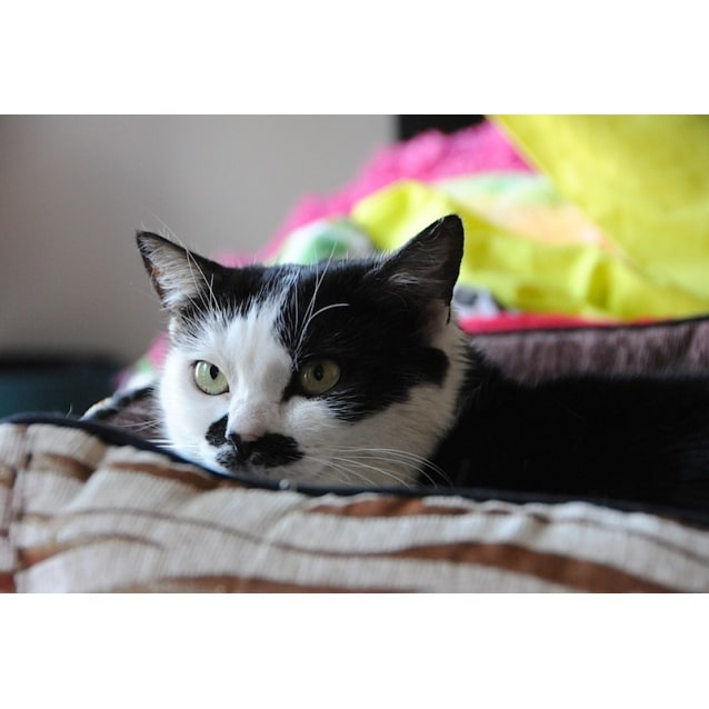 Photo of Charly 🎭    Quirky Sweet Girl Cat