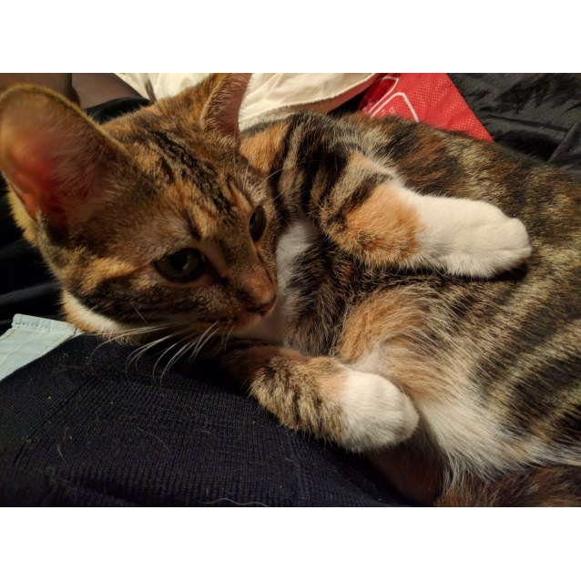 Photo of Hermione