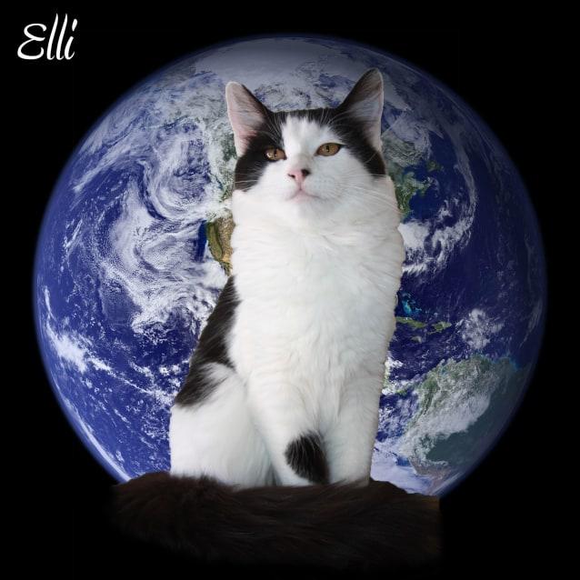 Photo of Elli  Ct17 199