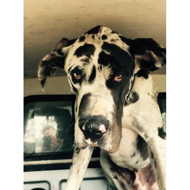 Photo of Leroy