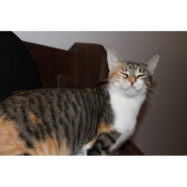 Photo of Ivy   So Intelligent