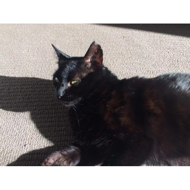Photo of Soot (Located In Brunswick East)