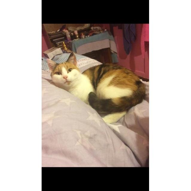Photo of Mucha