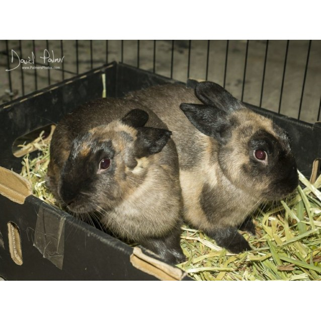 Photo of Preshes & Bruza **On Trial With Our New Family**