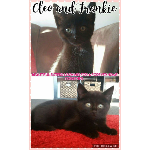 Photo of Cleo And Frankie