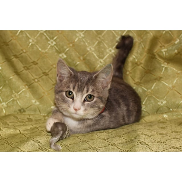 Photo of Stella **2nd Chance Cat Rescue**
