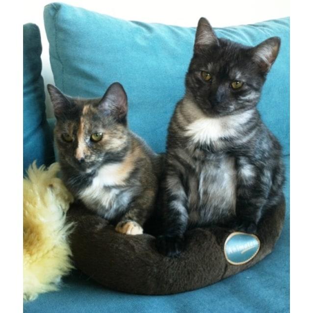 Photo of Benny & Charlotte