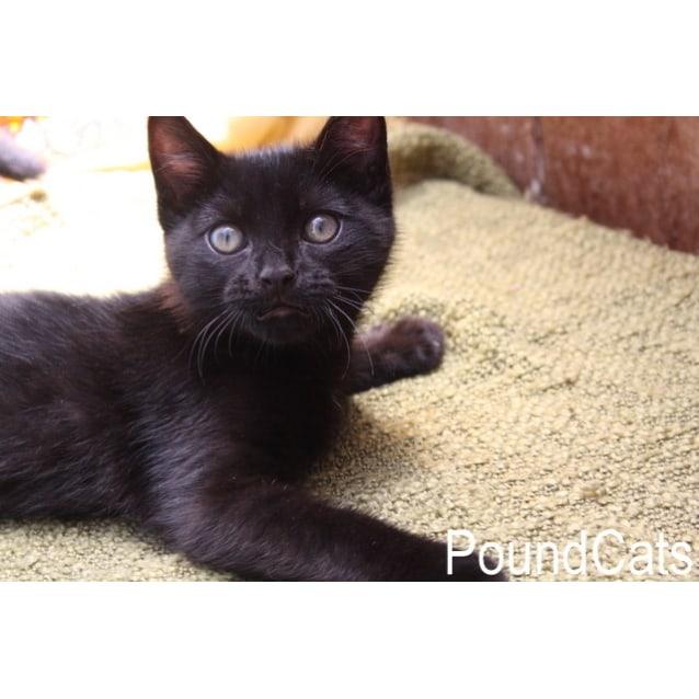 Photo of Pound Cats | Black Ninja