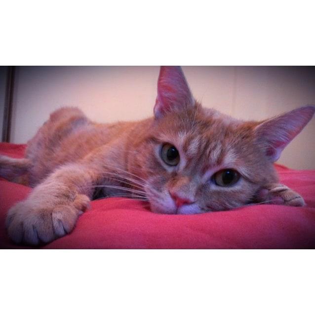 Photo of Kramer