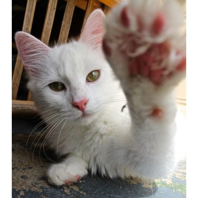 Photo of Vanilla ~ (Baby Cat)