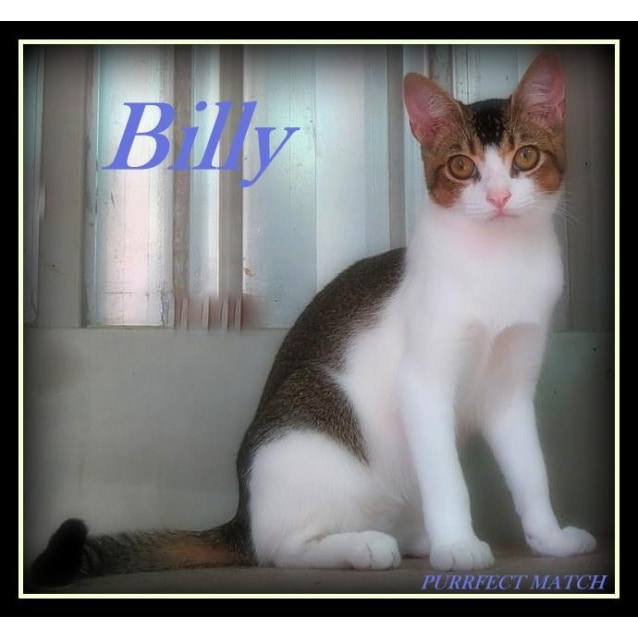 Photo of Billy    Purrfect Match
