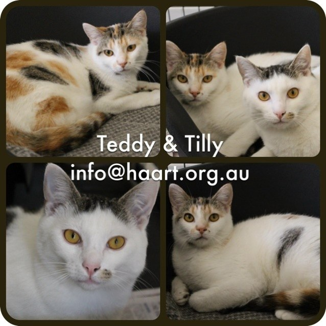 Photo of Tilly Hc13 189