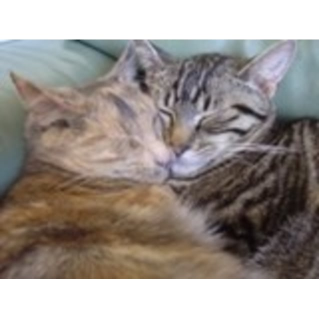 Photo of Foster Carers Needed For Older Kittens & Adult Cat