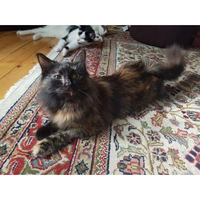 Photo of Lia