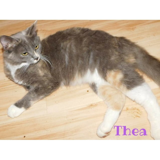 Photo of Princess Thea