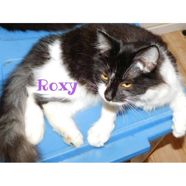 Photo of Roxy
