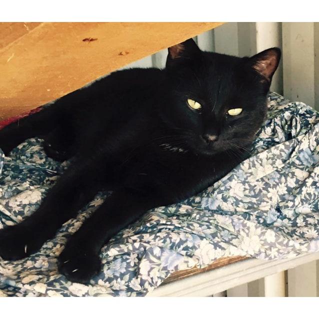 Photo of Effie
