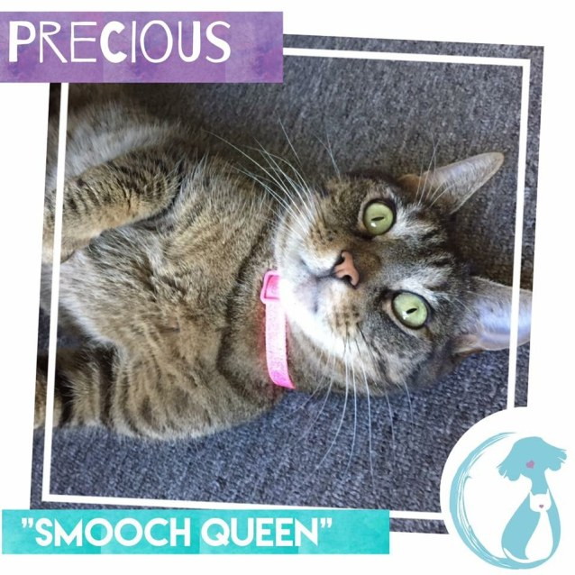 Photo of Precious *Limited Time $50 Adoption Fee