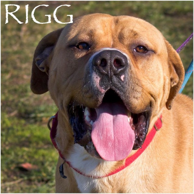 Photo of Rigg