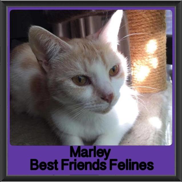 Photo of Marley