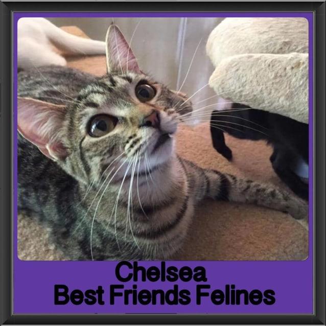 Photo of Chelsea