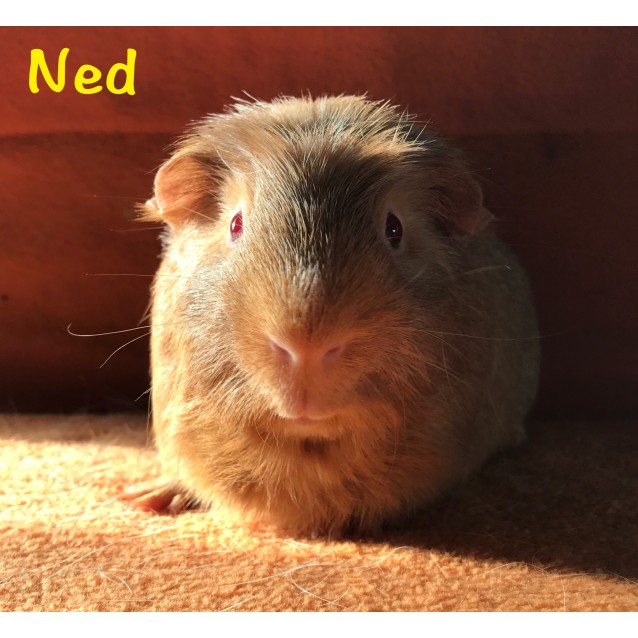 Photo of Ned