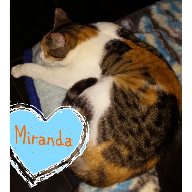 Photo of Miranda