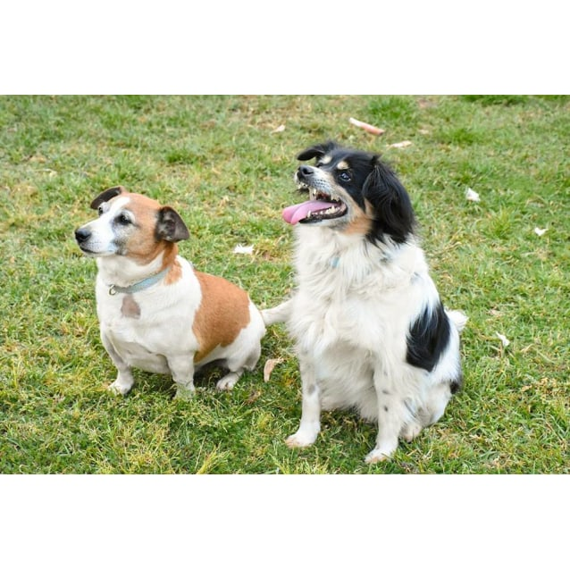 Photo of Ochie And Luckie