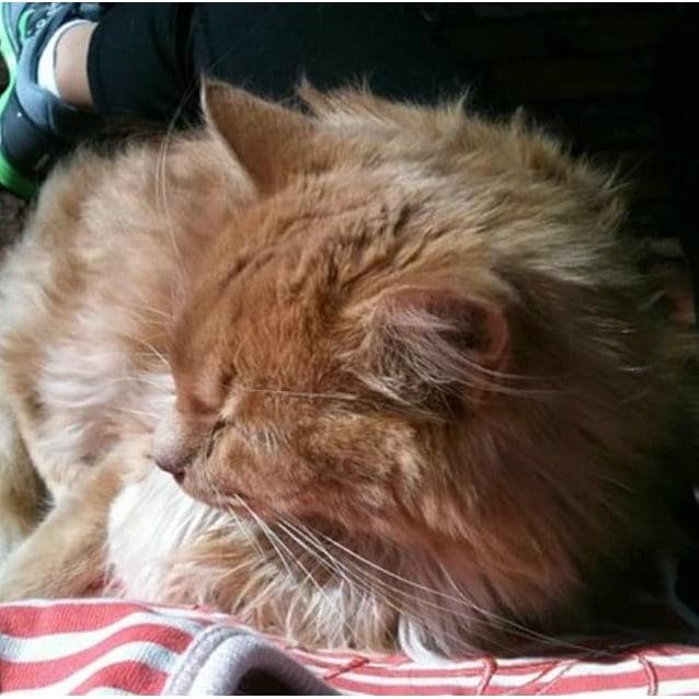 Photo of Saffron (Located In Greensborough)